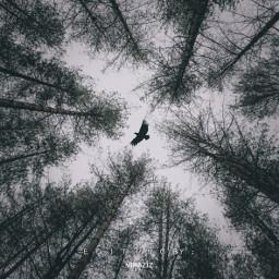 nature background black Falcon Crow Jungle trees dark blackandwhite sky bird darkaesthetic darkness forest naturephotography
