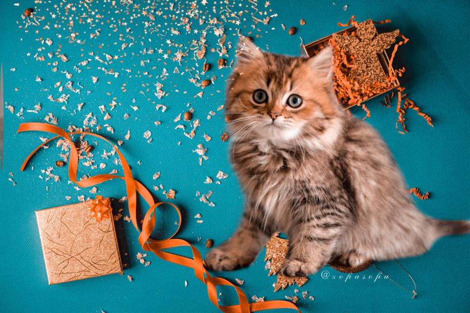 #happynewyear  #2021  #cute #cat   — 🙌🏻👐🏻👩🏽💻🇵🇱❤️😽