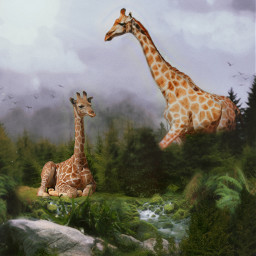 myedit giraffelove family giraffe sanctuary madewithpicsart landscapeart landscape stickers filters freetoedit