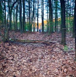 woods boston hikingtrails