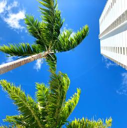 freetoedit palm tree building hawaii waikiki tropical city ocean sky