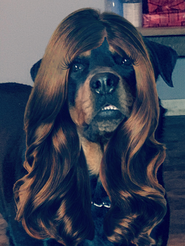 this is my favroite one yet😂#beautiful #photography #prettygirl #kevin #people #interesting #eyelashgoals #dogsofpicsart #dogs #doggo #dog #puppy #brunnette #hairflip #haircut #hairedit #dogedits #ohiophotos #outofthisworld #wonderful #model #modling #dogequeen #dogememe #night