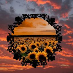 sunsetandsunflowers freetoedit