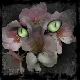 picsart picsartedit picsarteffects art artistic artwork editedwithpicsart cats eyes flowers freetoedit
