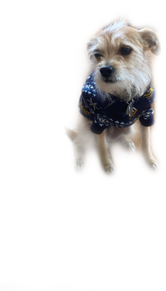 cute dog freetoedit