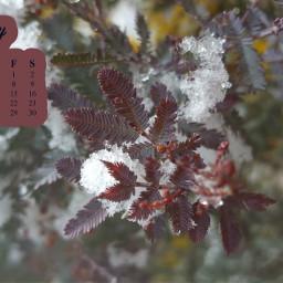 freetoedit januarycalendar january winter leaf leaftree tree snow snowwhite 2021 newyear calendar challenge srcjanuarycalendar