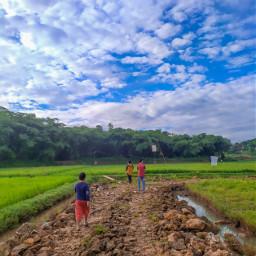 sawah padi beras nature natural alami rice ricefield nasi explore alam petani pemandangan freetoedit