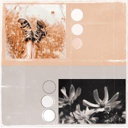 beigeaesthetic greyaesthetic floweraesthetic freetoedit rccolorsoftheyear colorsoftheyear