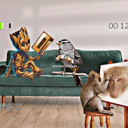 armchair freetoedit irccomfysofa comfysofa
