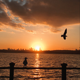 freetoedit photography photographer nature sky sun sunset followme travel traveller fotografia istanbul turkey beach picsart birds animals picoftheday