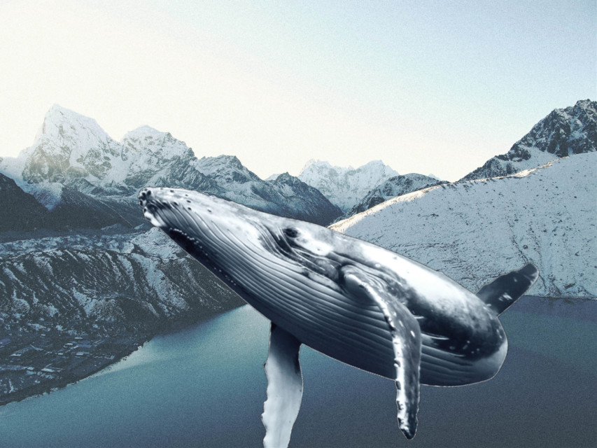 #remix #surreal #whale #blue #remixit