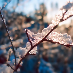freetoedit winter snow frozen coldday nature myphoto