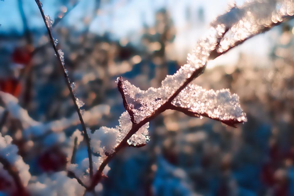 #winter #snow #frozen #coldday #nature #myphoto
