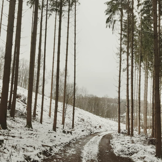 #saarland  #winter #pinetrees #snow #forest