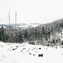 winter forest saarland germany snow freetoedit