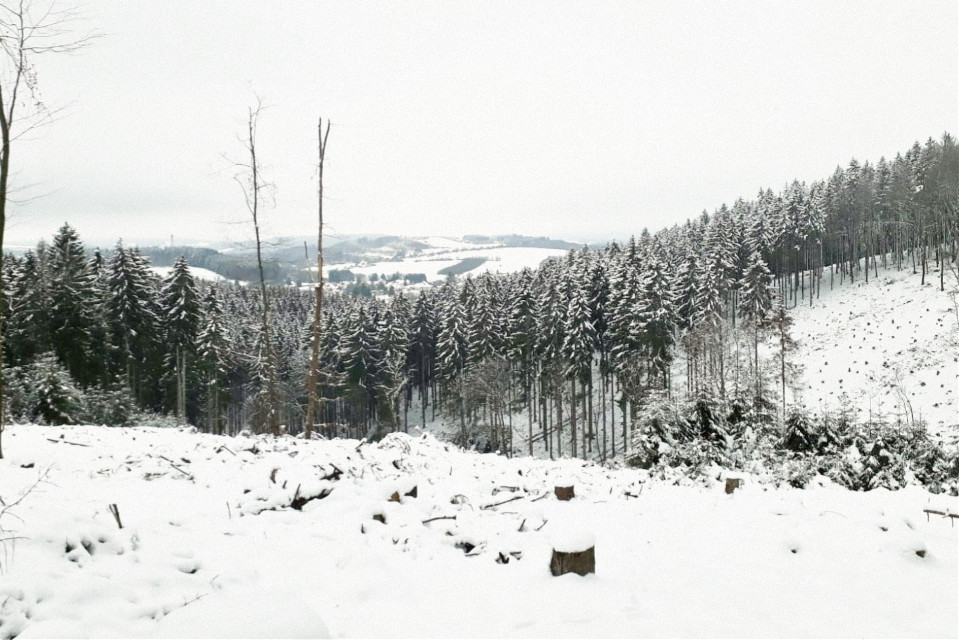 #winter #forest #saarland #germany #snow