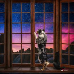 myriam70 surreal window cat dog