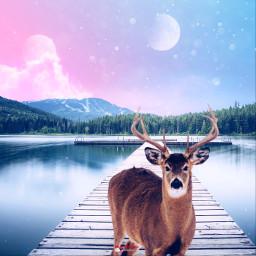 deer pink dreamy myriam70 nature planets