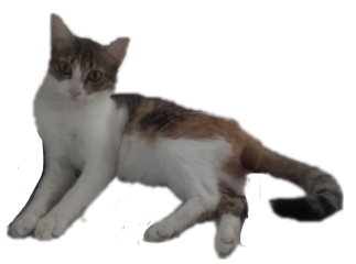 freetoedit cat catcute mieko alzib