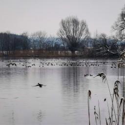 duck ducks lake water winter nature photography animals