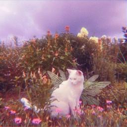 fairy fairykittens fairywings cat cats kitties kitten kittens fairycore cottagecore adorable freetoedit
