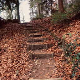 freetoedit stairs hiking forest woods wood leaves trees way thankyou thankyousomuch loveyou