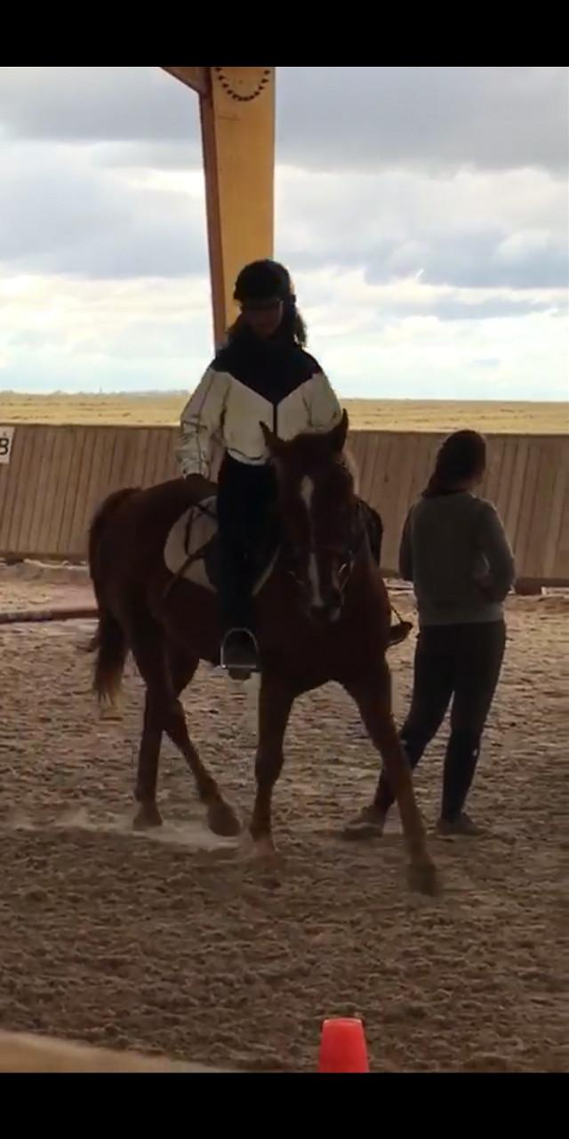 #equitation