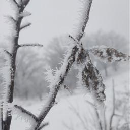 иней зима