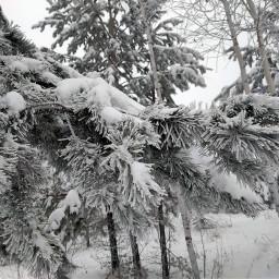 лес зима
