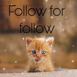 followforfollow freetoedit