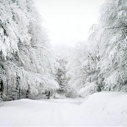 woods pcnaturethroughmyeyes naturethroughmyeyes