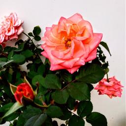 freetoedit photography flowerphotography aditings spreadlove