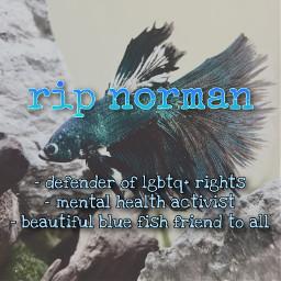 freetoedit ripnorman normanthefish