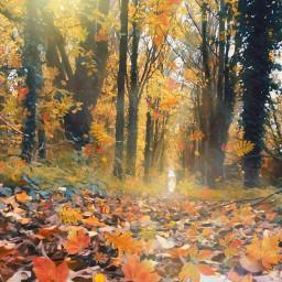 interesting nature trees autumn autumncolors autumntrees autumnforest sun orange yellow forest sky autumnsky beautifull beautifulforest beautifultrees freetoedit