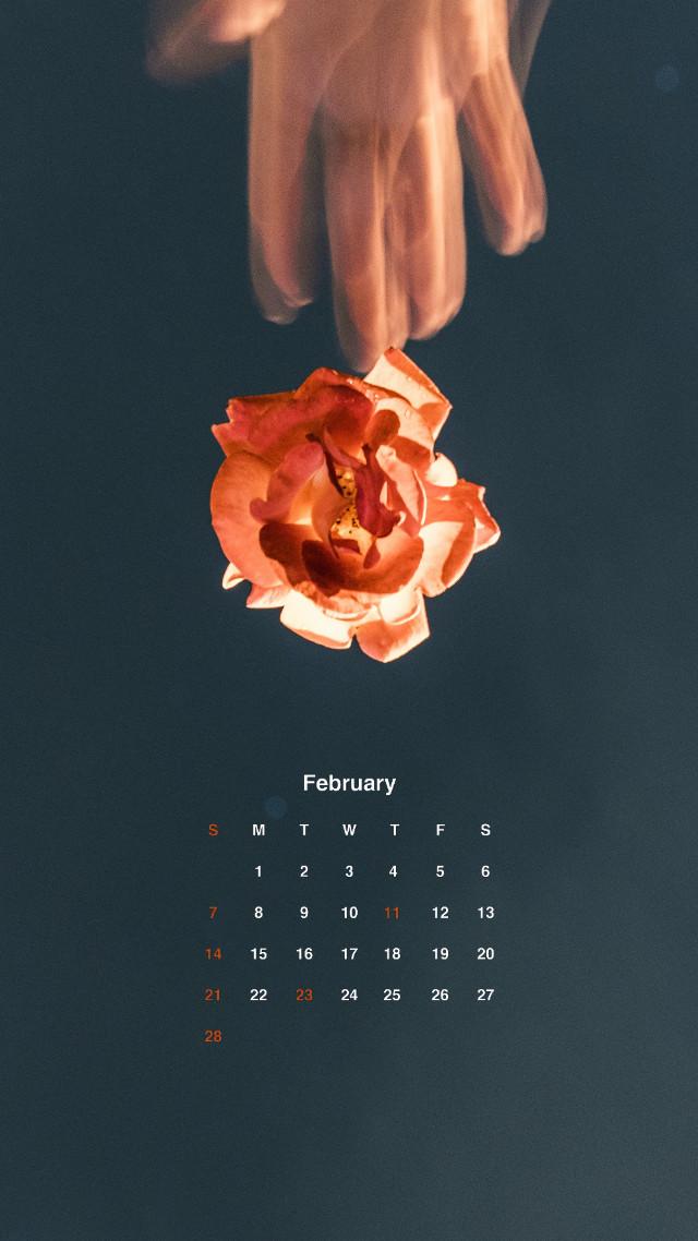 #2021 年 #2月 のカレンダー📅  #カレンダステッカー を使えば誰でもお気に入りの写真でカレンダー付きのロック画面用待受画像が作れます🙌 スタイルは全部で3種類!ステッカーのメニューからプレミアムタブをチェック✅ #カレンダー #calendar #calendar2021 #februarycalendar #2月のカレンダー #picsart #picsartedit #madewithpicsart