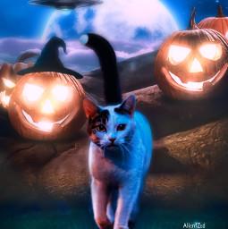 mastershoutout shoutout cat halloween supermoon aliens night pumpkins light fantasy alienized wallpaper uhd editedwithpicsart freetoedit