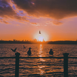 freetoedit photography photooftheday photographer nature landscape followme travel beach sea sky fotografia picsart sunset birds