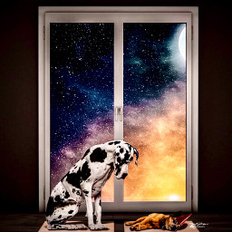 myriam70 dog sky surrealsky