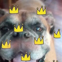 king freetoedit