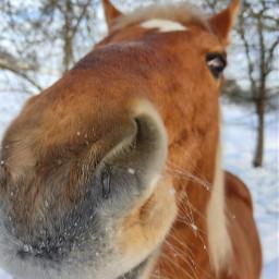 horse nofilter naturephotography