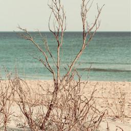 nature beautifulsundayafternoon wintertime beachwalk enjoyingnaturesbeautyadayatatime freetoedit