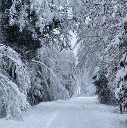 freetoedit winterforest snow switzerland