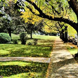 freetoedit yellow leaves rememberingautumn gone bye trees city street