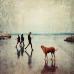 street people dog blur texture heypicsart moody dreamy onlygoodvibes goodvibesonly mobilephotography iphone streetphotography