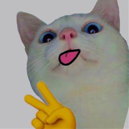 catmeme memez meme cat lol funny freetoedit