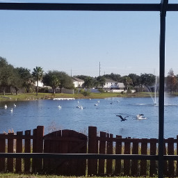 photography nature naturephotography water reflections grass fence lake view landscape houses distance sky clouds blue myphoto fauntain birds ducks seagulls swans