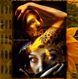 sunflower onlyyouaremysunflower