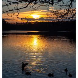 sunset siluette ducks lake schlachtensee myberlin freetoedit
