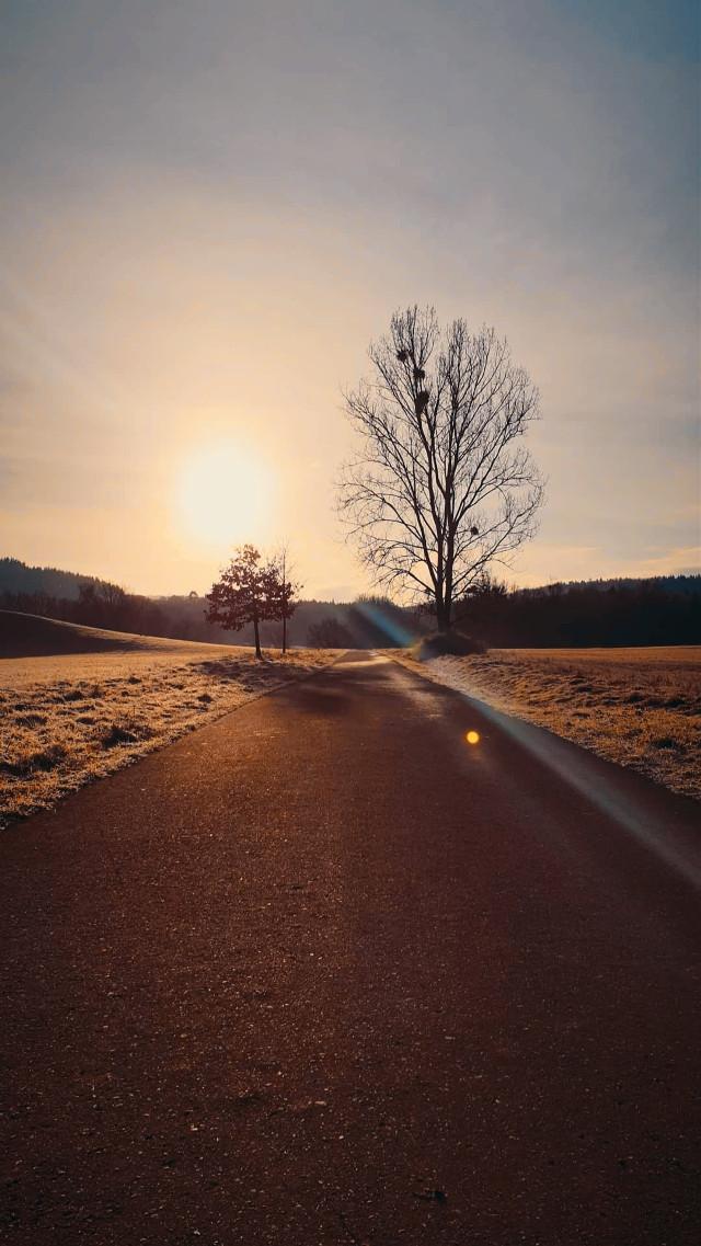 🧡 Good Morning World 🌞  #freetoedit #photography #routinelife #morningwalk #walkinginthenature #sunrise #coldseason #natureinjanuary   #beautifulnature #naturelovers