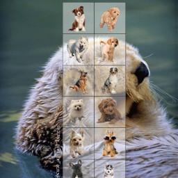 bingo firstpost cute animal cuteanimals dogs dogbingo otter cuteanimal cuteanimalbingos freetoedit